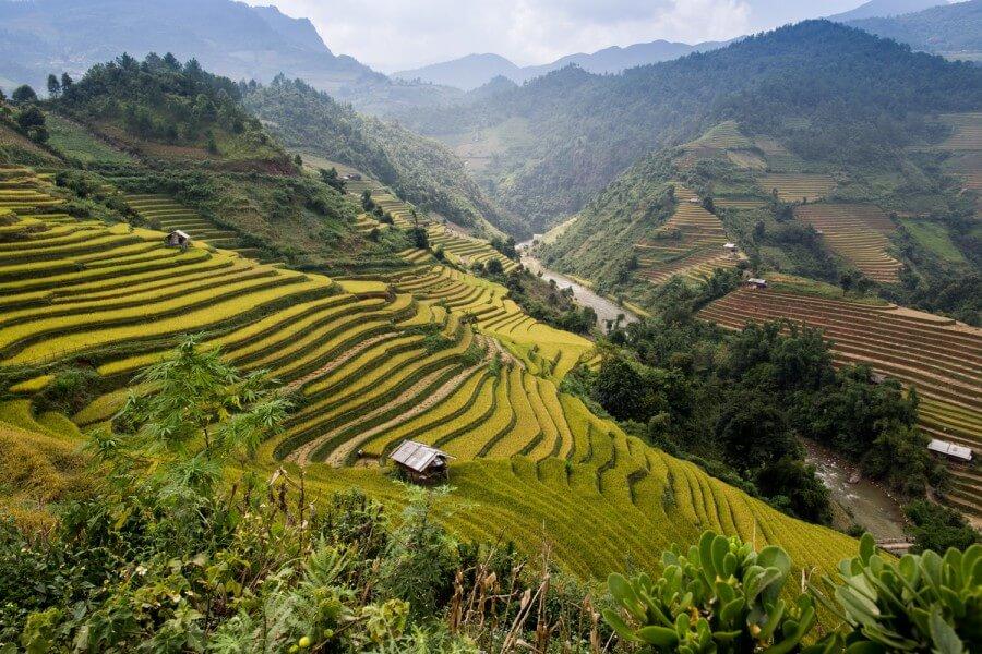 Mu Cang Chai rice terrace landscape