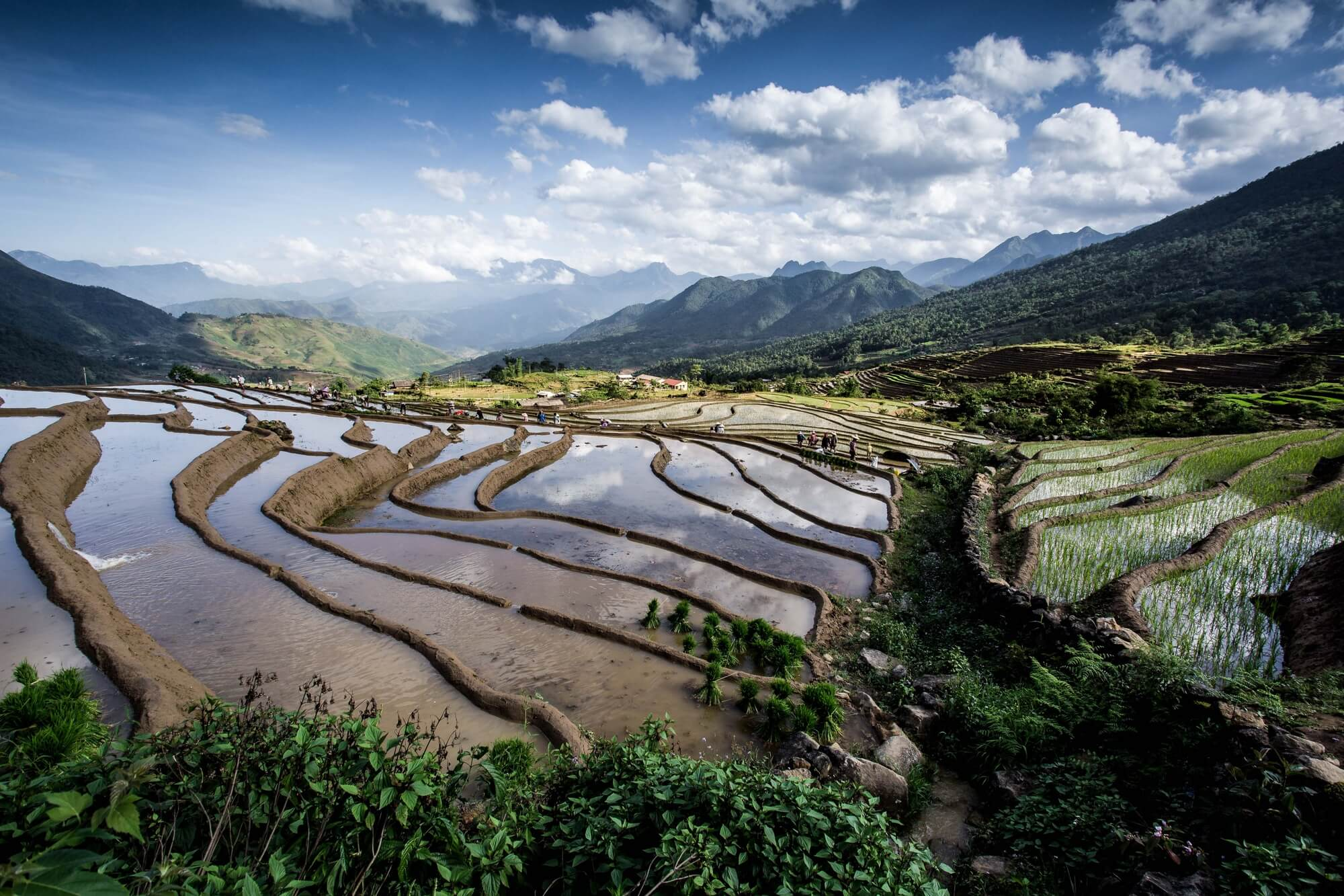 Vietnam Rice Terrace Plantation Season
