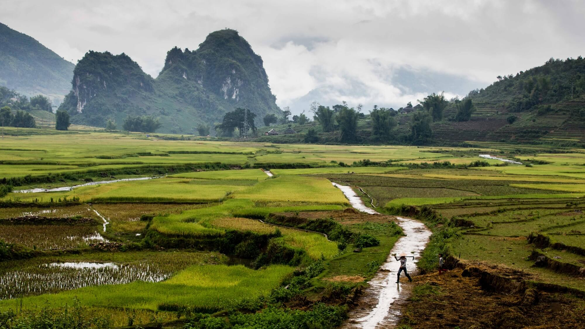 North Vietnam mountain valley landscape with rice worker