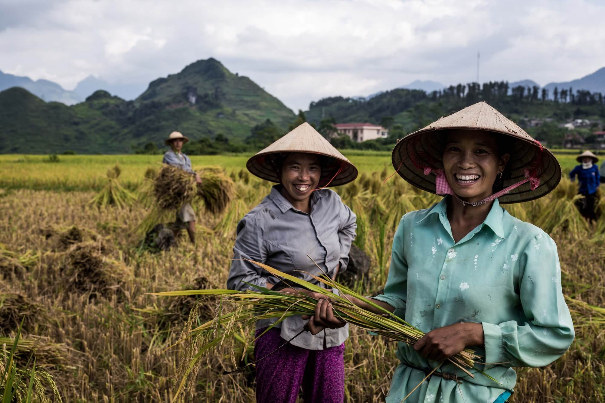 North Vietnamese rice workers portrait in Quan Ba