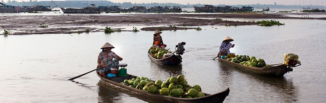 Coconuts vendors